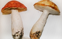 Ёлочная игрушка — грибы.